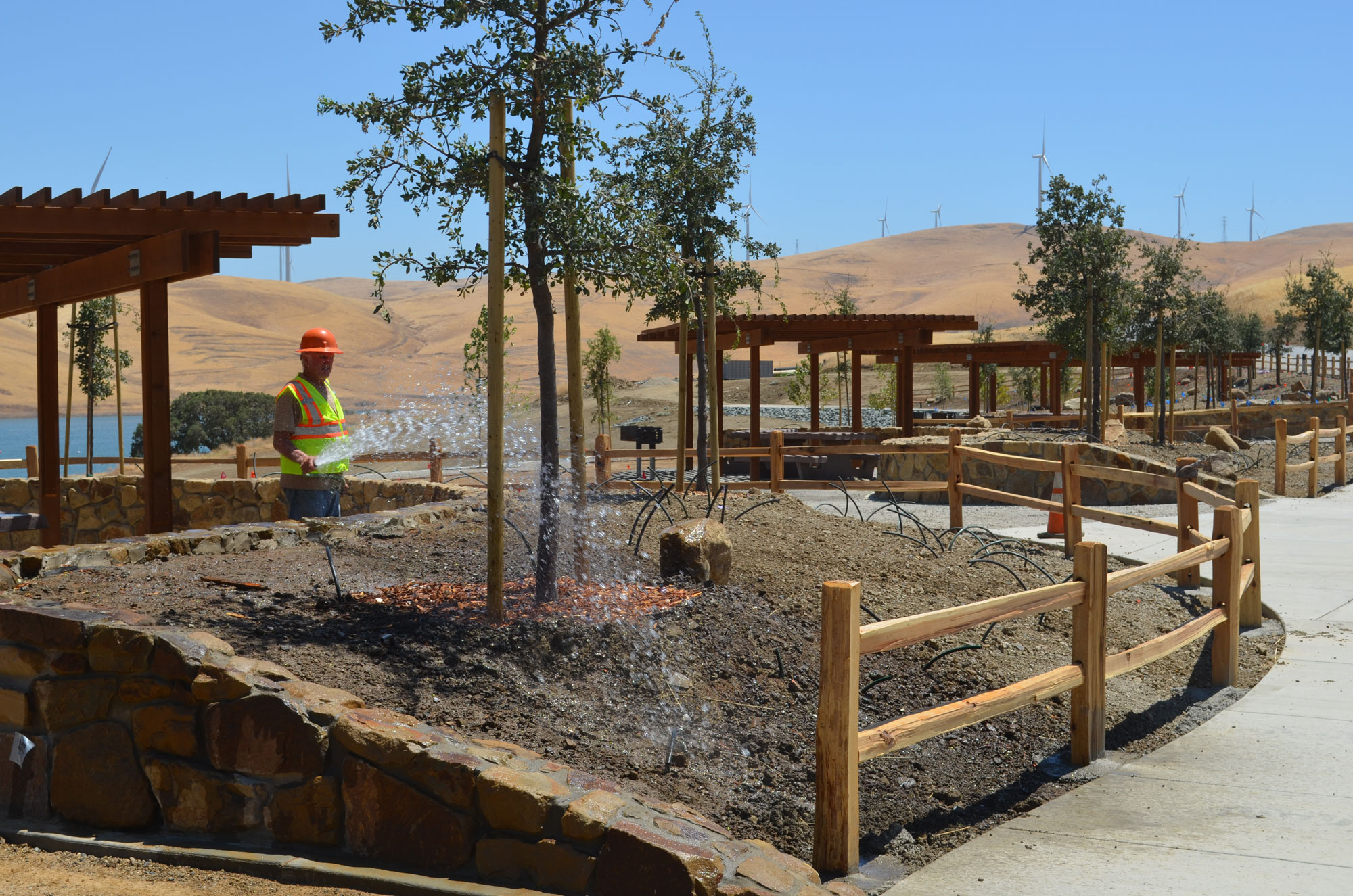 A construction worker irrigates oak trees planted